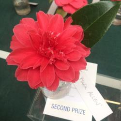 Camellia 'Mark Allen' Second Prize