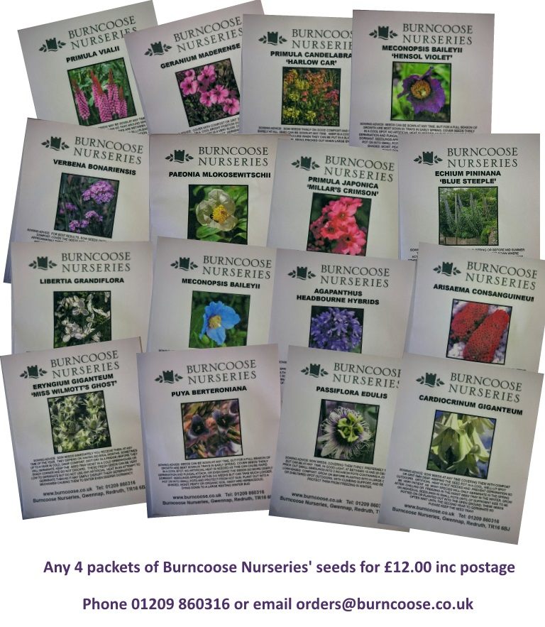 Seed packs 4 for £12.00