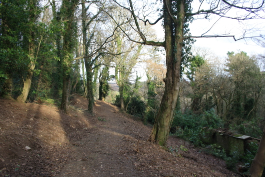 Old Park Wood in 2013