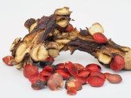 4 Ripe Magnolia sargentiana robusta seed
