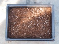 3 Old fashioned wooden seed trays