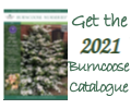 Order the 2021 Burncoose Catalogue