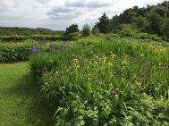 Northumberland, planting by Burncoose, 11