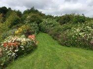 Northumberland, planting by Burncoose, 12