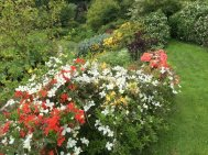 Northumberland, planting by Burncoose, 13