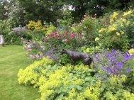 Northumberland, planting by Burncoose, 14