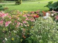 Northumberland, planting by Burncoose, 3