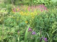 Northumberland, planting by Burncoose, 4