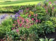 Northumberland, planting by Burncoose, 7