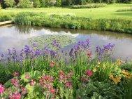 Northumberland, planting by Burncoose, 8