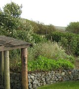 Cliff top gardening by Burncoose Nurseries