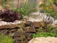 Una St Ives, planting by Burncoose, 24