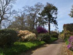 Views from Burncoose Gardens 3