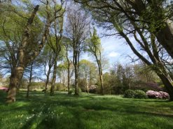 View Burncoose Gardens