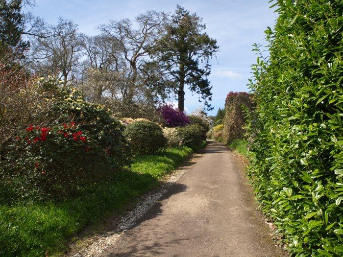 Views from Burncoose Gardens
