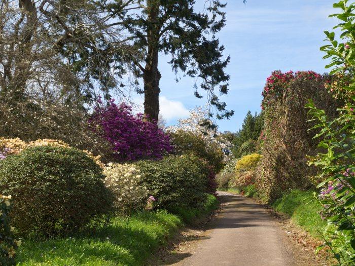 Views from Burncoose Gardens 2