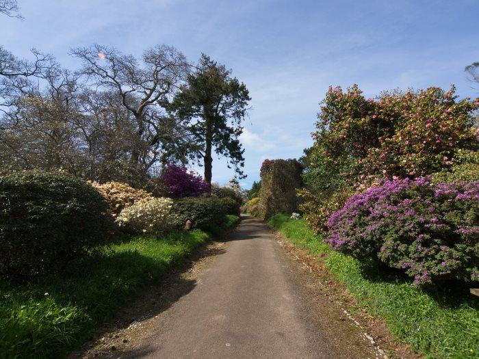 Views from Burncoose Gardens 4