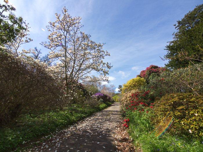 Views from Burncoose Gardens 5