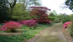 acers on the drive
