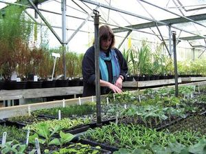 Propagation at Burncoose Nurseries
