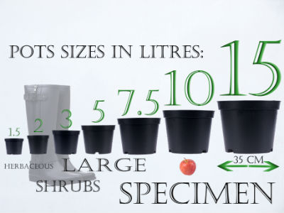 Pot size comparision