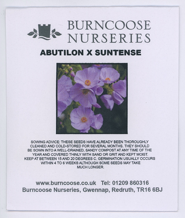 Abutilon X Suntense From Burncoose Nurseries