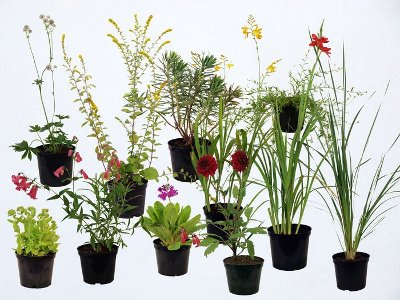 Various plants in pots