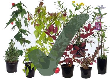 Plants we supply