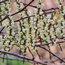 STACHYURUS chinensis