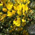 Small image of ULEX