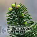 Small image of ABIES