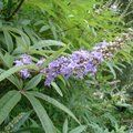 Small image of VITEX