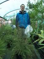 Protecting Leptospermum