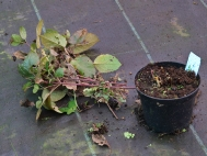 3.Compost top growth