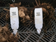 8.	And remember to label each plant