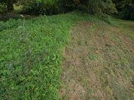 Second grass cut